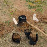 Algumas das espécies plantadas no viveiro de mudas da Faculdade Suprema em JF